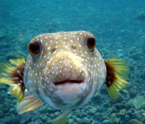 autistic fish